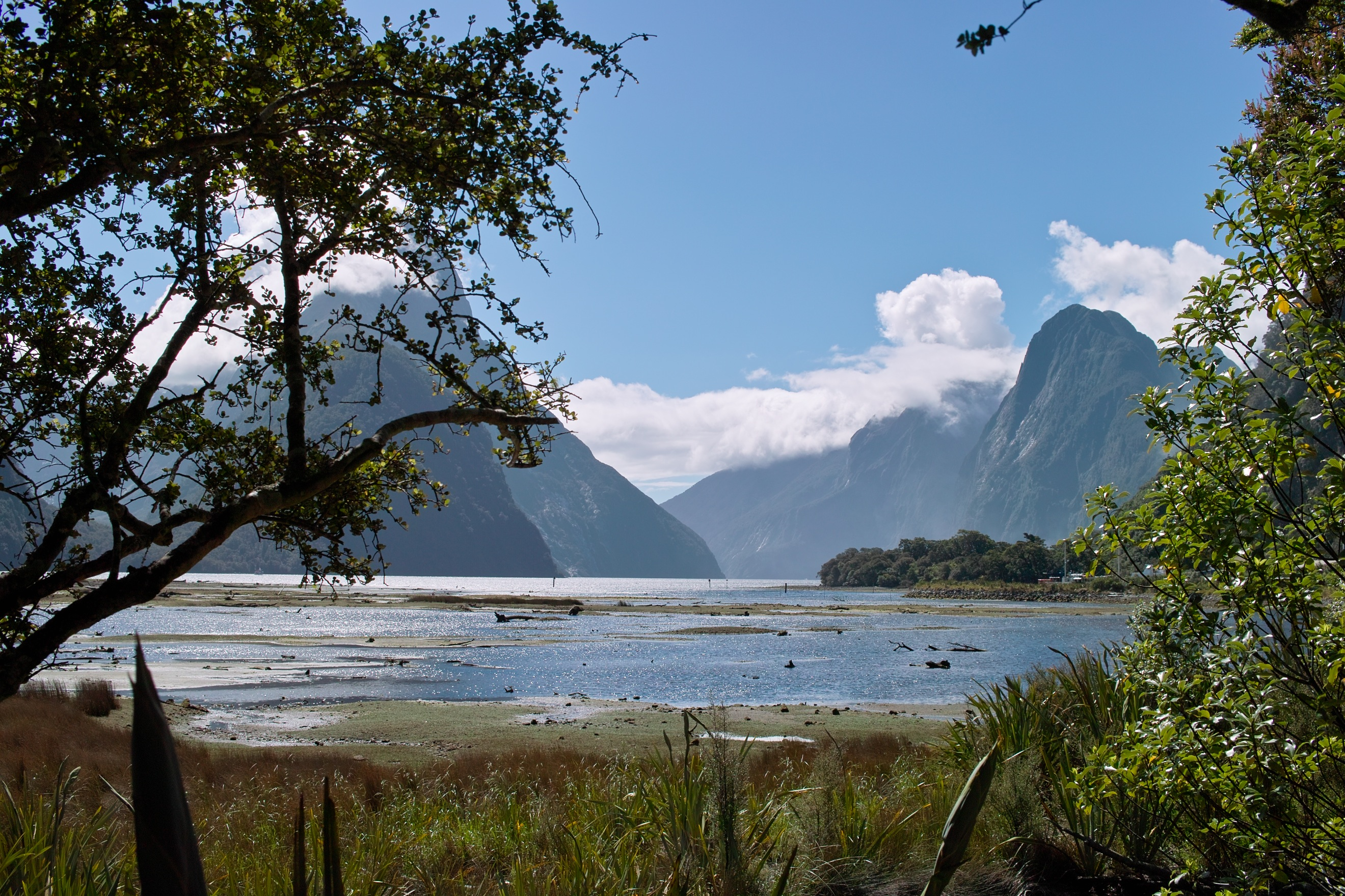 2498 - Milford Sound walkway view
